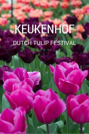 Keukenhof 2016: Amsterdam's Tulip & Flower Festival