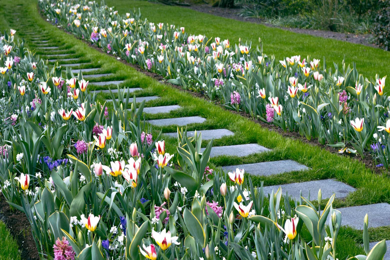 Path Lined with Tulips at the Flower Festival