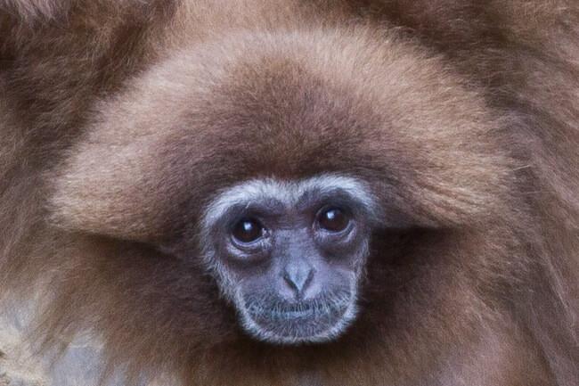 Primates at Rostock Zoo