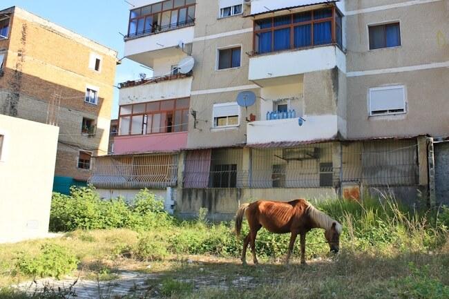 Random horse in Berat Albania