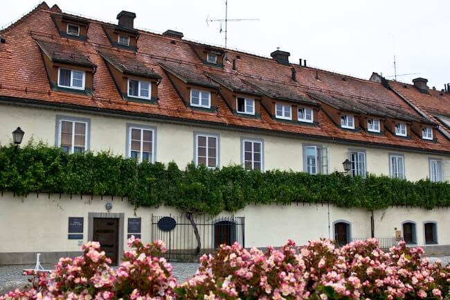 The 400 year old grapevine in Maribor