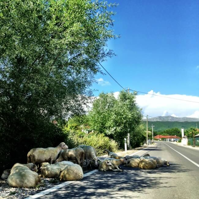Driving obstacles in Montenegro