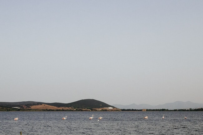 Pink flamingos in the lagoon at Porto Pino