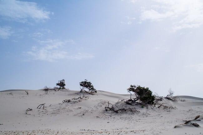 Dunes in Sardinia