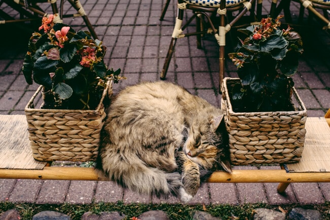 It's a cat's life.