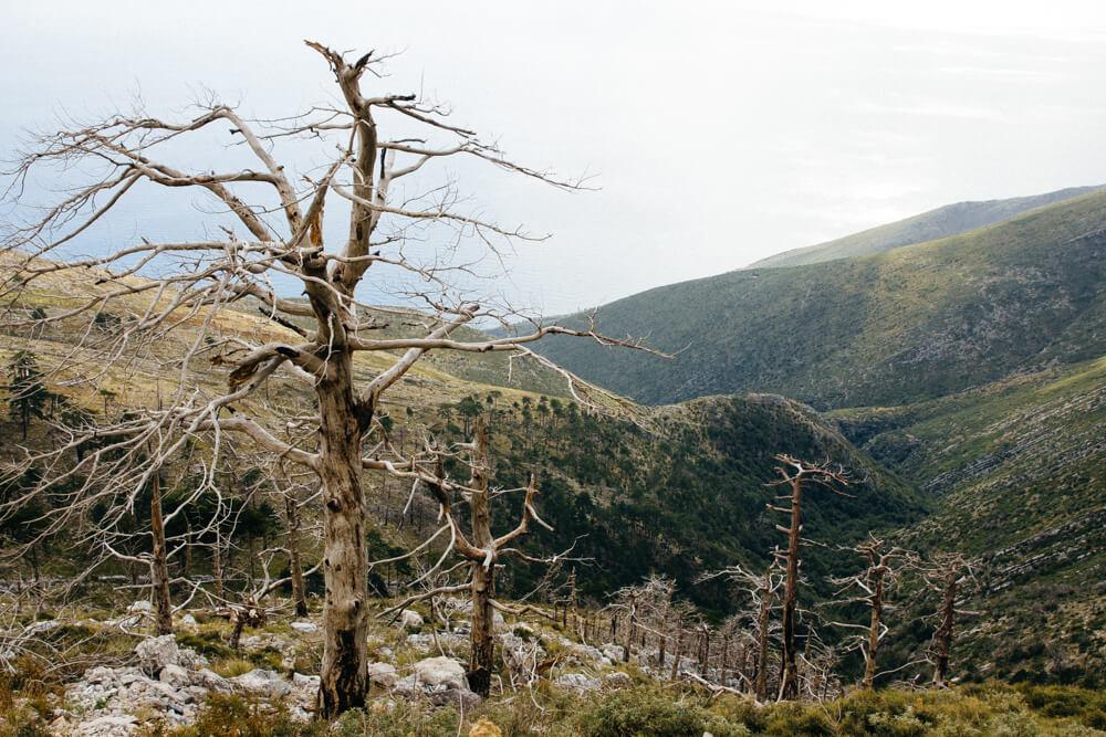 Dead Trees Along the Llogara Pass