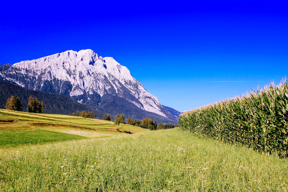 Austrian Corn Fields