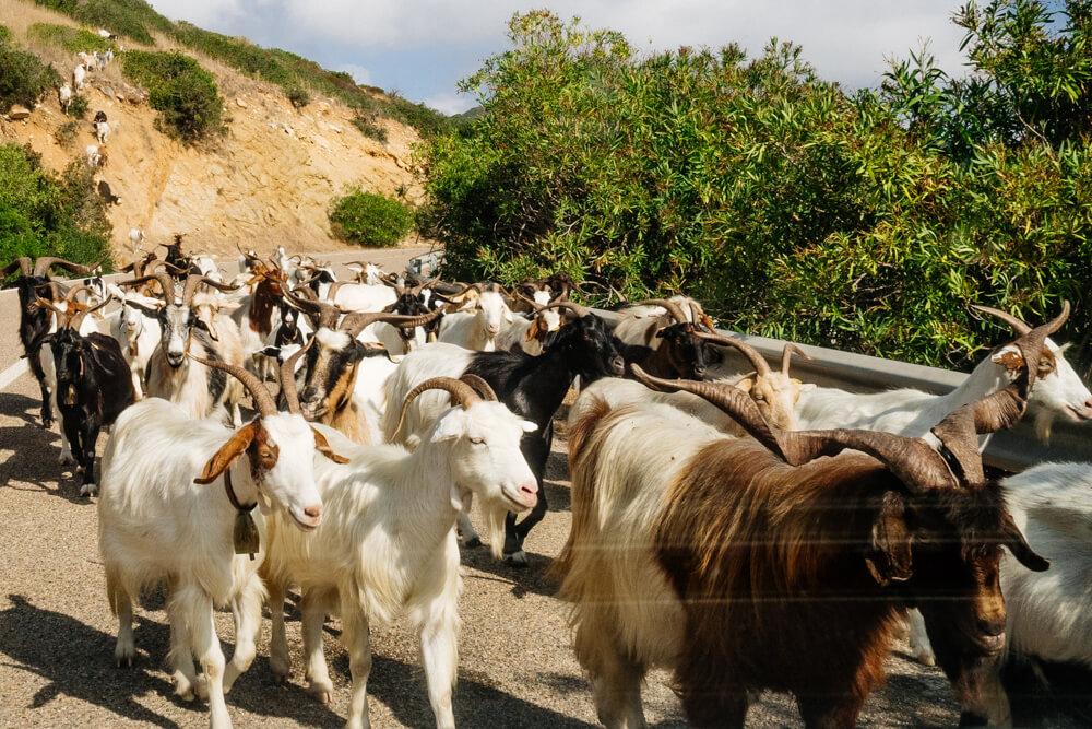 Sardinia's Summer Traffic