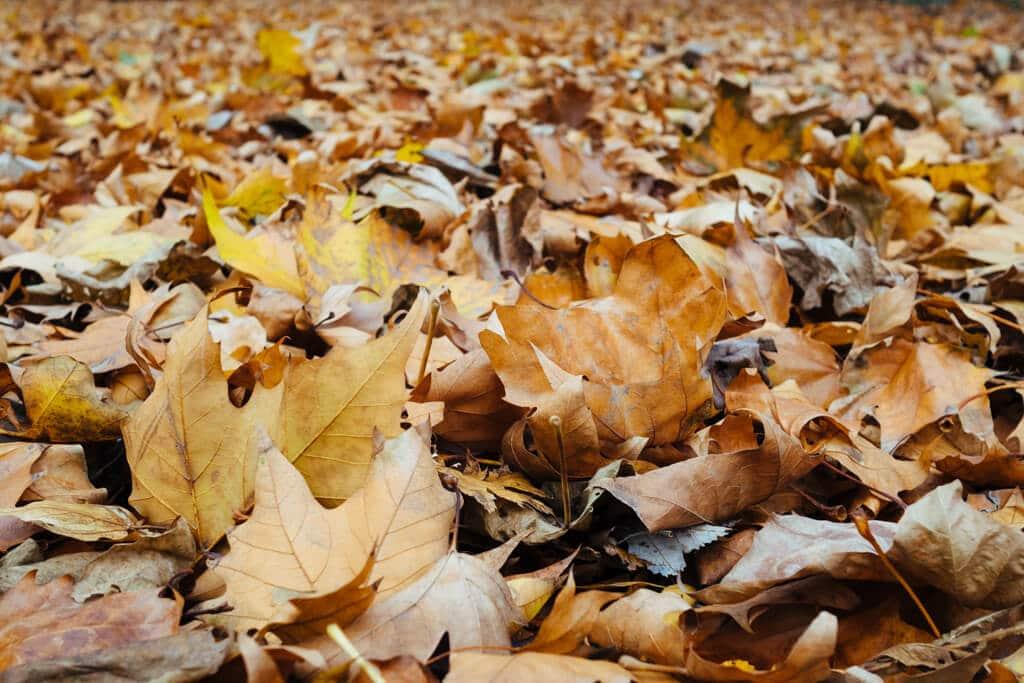 Autumn at Margaret Island