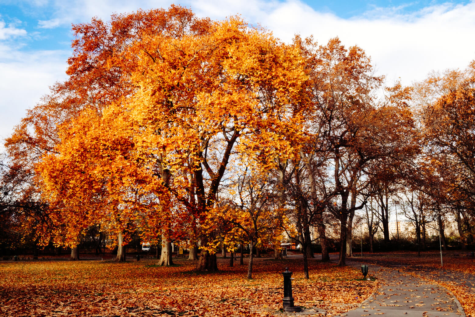 Margaret Island in Autumn
